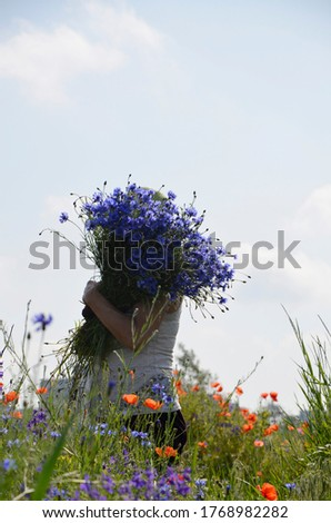 A woman holds a large bouquet of blue cornflowers against the blue sky. A woman in nature against a background  poppies and blue cornflowers. Side view. A variety of blooming wildflowers.  #1768982282