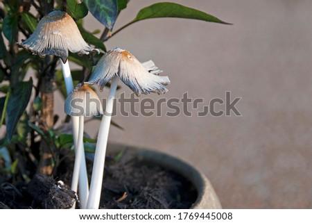 Mushrooms family of three in summer #1769445008