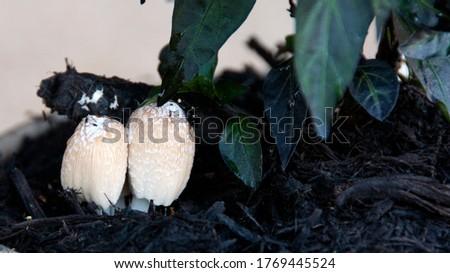Mushrooms in a flower pot #1769445524
