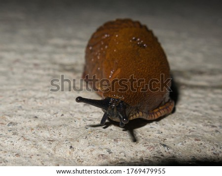 A snail or slug. Close-up picture. High quality photo