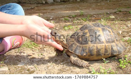 Greek tortoise, turtle. a little girl caressing a tortoise head. kid wants to become an exotic veterinarian in the future. Veterinary medicine. wildlife vet. reptiles, reptile, animals, animal, pets #1769884757