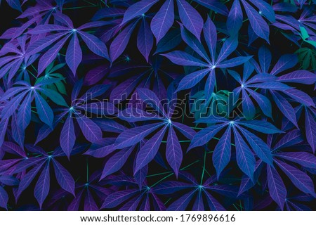 closeup nature view of green leaf and palms background. Flat lay, dark nature concept, tropical leaf #1769896616