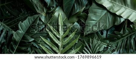 closeup nature view of green leaf and palms background. Flat lay, dark nature concept, tropical leaf #1769896619