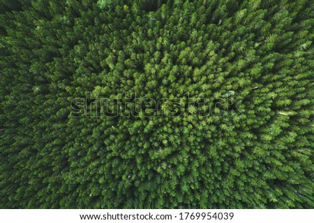Aerial view coniferous forest trees drone landscape flying above woods scandinavian nature top down scenery Royalty-Free Stock Photo #1769954039