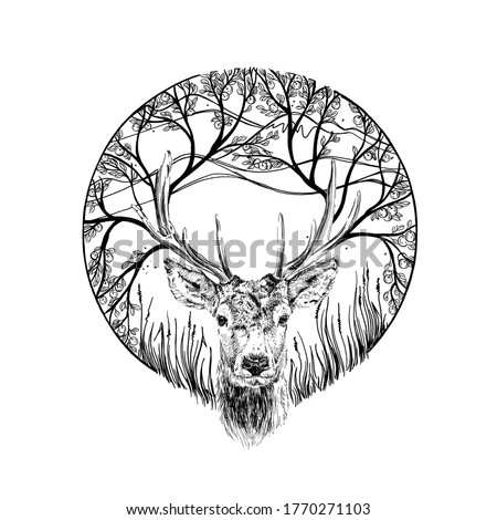 Hand drawn deer portrait, sketch graphics monochrome illustration on white background (originals, no tracing)