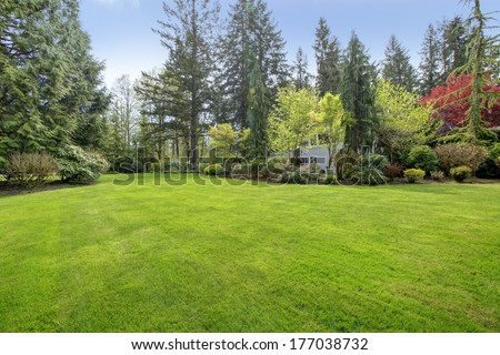 Amazing farm house backyard with green lawn, fir trees, bushes #177038732