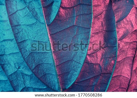 Close up Beautiful abstract leaf in neon light. Minimalism modern style concept. Background pattern for design. Macro photography view.