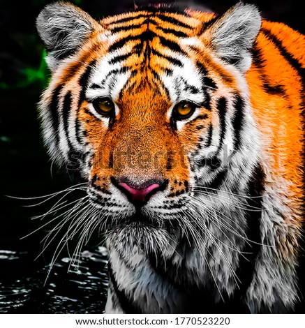 Beautiful picture of tiger face in wildlife