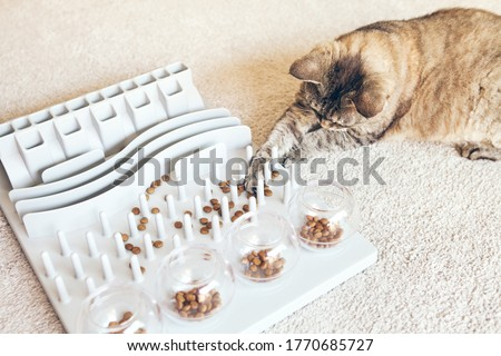 Close-up, playful cat is touching and punching food with paw. Entertaining, mental challenge game for your cat, can be used for daily feeding with dry food and snacks. Slow feeder toy. Royalty-Free Stock Photo #1770685727