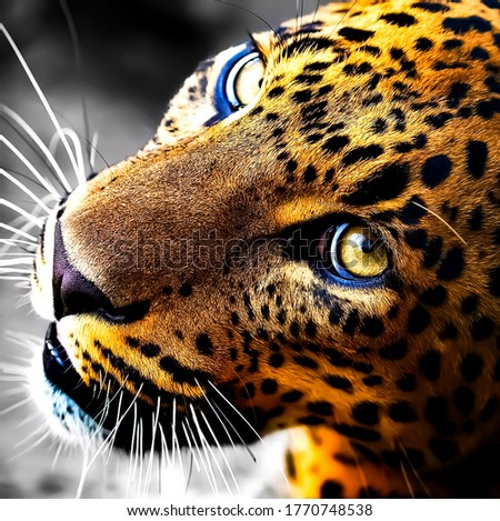 Beautifull picture of leopard face in wildlife
