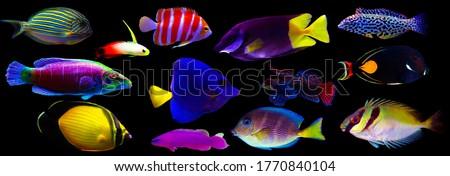 Group of marine animals isolated on black background (Fishes, Corals, Invertebrates) Royalty-Free Stock Photo #1770840104
