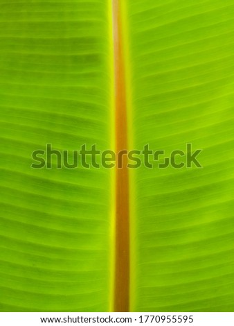 Pros and characteristics of banana leaves. #1770955595
