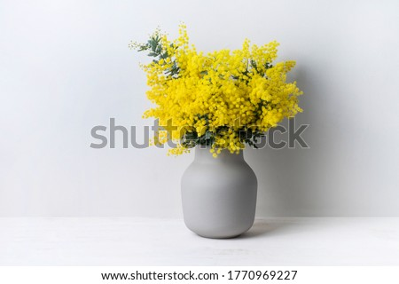 A beautiful floral arrangement of Australian native yellow wattle/acacia flowers in a grey vase on a white table with a white background. Know as Acacia baileyana or Cootamundra wattle. #1770969227