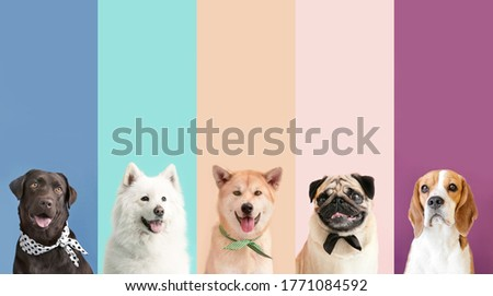 Collage of photos with different dogs Royalty-Free Stock Photo #1771084592