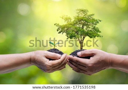 environment Earth Day In the hands of trees growing seedlings. Bokeh green Background Female hand holding tree on nature field grass Forest conservation concept Royalty-Free Stock Photo #1771535198