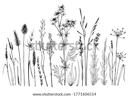 Set of wild meadow herbs and flowers. Hand drawn black and white vector illustration. Isolated elements for design. Royalty-Free Stock Photo #1771606514