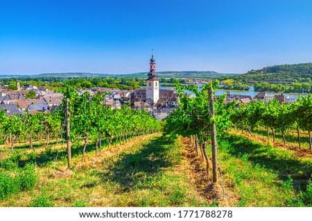 Aerial view of vineyards Rheingau wine region, Rudesheim am Rhein historical town centre with St. Jakobus church and Rhine river, blue sky background, Rhineland-Palatinate and Hesse states, Germany #1771788278