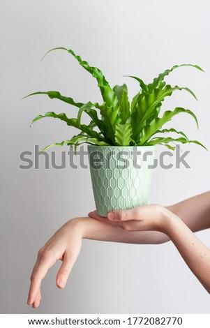 Female hands holding plant, bird's nest fer #1772082770