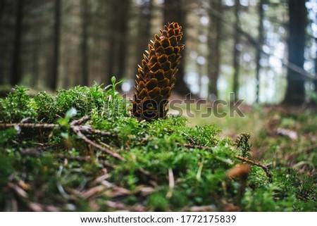 Beautiful cones in the spring #1772175839