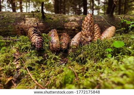 Beautiful cones in the spring #1772175848