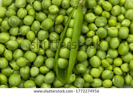 Green Peas. Green background. Green pea top view copy space. Fresh organic green peas. Vegetable harvesting.Beautiful close up of fresh peas and pea pods. Healthy vegetarian food #1772274956