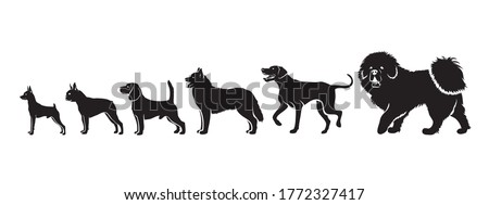 Dog breeds by size - isolated vector illustration
