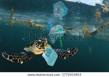 Environmental issue of plastic pollution problem. Sea Turtles can eat plastic bags mistaking them for jellyfish  Royalty-Free Stock Photo #1772455853