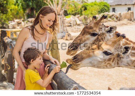 Happy mother and son watching and feeding giraffe in zoo. Happy family having fun with animals safari park on warm summer day Royalty-Free Stock Photo #1772534354