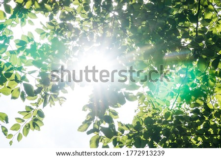 Bright sun shining through the green leaves in a forest and beautiful green lens flares Royalty-Free Stock Photo #1772913239