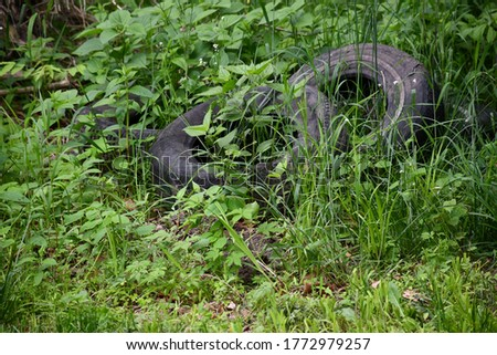 Tires left on the ground. Plants and weeds are growing in and around it. Picture taken in Kansas City, Missouri.