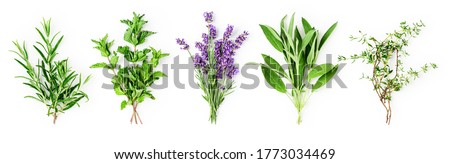 Rosemary, mint, lavender, sage and thyme collection. Creative banner with fresh herbs bunch on white background. Top view, flat lay. Floral design. Healthy eating and alternative medicine concept