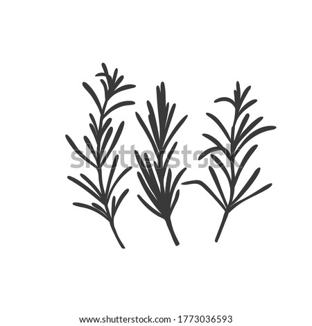 Rosemary silhouette icon. Culinary herbs. Monochrome condiment vector illustration. Royalty-Free Stock Photo #1773036593