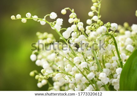 Lily of the valley flowers. Natural background with blooming lilies of the valley. High resolution photo. Selective focus.