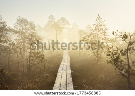 A wooden pathway trough the coniferous forest in a thick mysterious fog at sunrise. Cenas tirelis, Latvia. Sunlight through the old tree trunks. Idyllic autumn landscape. Natural tunnel, fairy scene Royalty-Free Stock Photo #1773458885