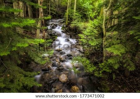 Forest river creek water flow. River creek in forest. Deep forest river creek flowing. River creek in deep forest #1773471002