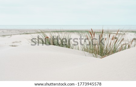 Dune landscape at the North Sea Beach Royalty-Free Stock Photo #1773945578