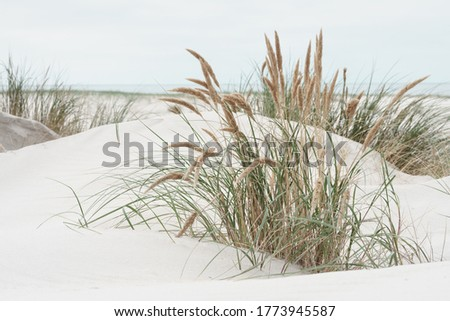 Dune landscape at the North Sea Beach Royalty-Free Stock Photo #1773945587