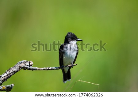 Various pictures of birds and other wildlife