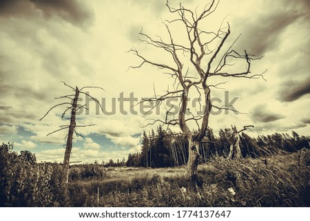 Landscape, sunny dawn in a field Royalty-Free Stock Photo #1774137647