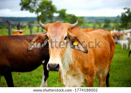 Best 9,000+ Cow Pictures & Images Stock Photo [HD]