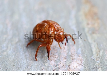 This is a picture of a cicada's empty shell.