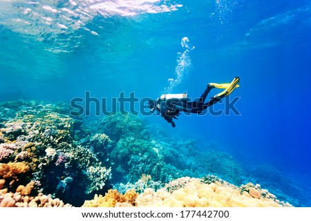 Female scuba diver swimming under water Royalty-Free Stock Photo #177442700