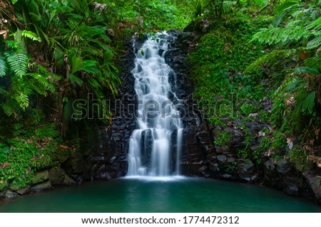 A cascade in the tropical forest of Basse Terre, Guadeloupe Royalty-Free Stock Photo #1774472312
