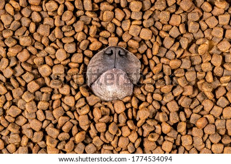 Happy French Bulldog swims in a sea of dog food Royalty-Free Stock Photo #1774534094
