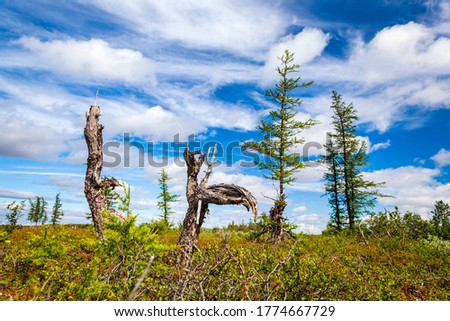 Beautiful landscape of forest-tundra, tree roots, driftwood of interesting shape on the background of forest tundra