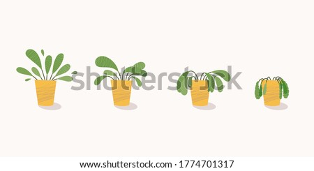 Stages of withering, a wilted plant in a pot, abandoned houseplant without watering and care. Potted plant dying. Vector illustration #1774701317