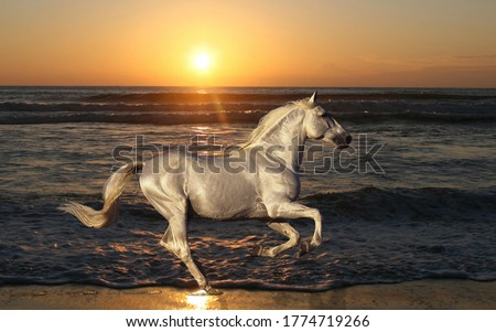 Majestic Silver Horse Galloping on the Sea Shore in the sunset Royalty-Free Stock Photo #1774719266