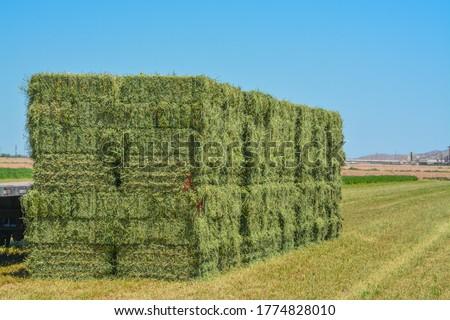 Alfalfa Hay, grown, Baled, ready to be shipped to feed stores. Goodyear, Maricopa County, Arizona USA Royalty-Free Stock Photo #1774828010