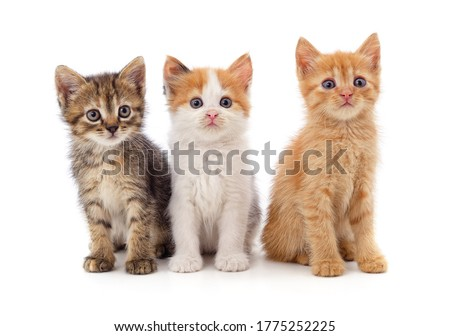 Three small kittens isolated on a white background. Royalty-Free Stock Photo #1775252225