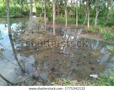 natural pond with teak tree and blue sky reflections on the water #1775342132